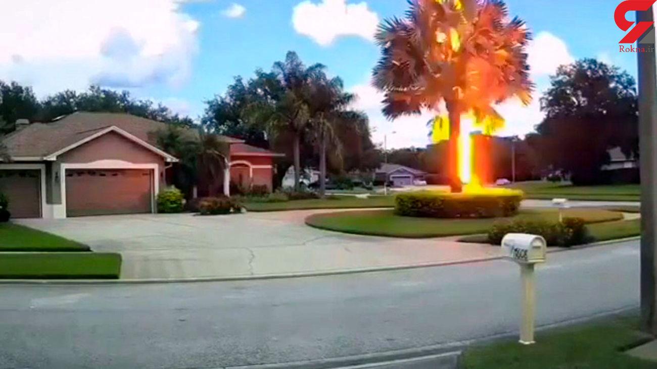 اصابت ترسناک صاعقه به یک درخت + فیلم