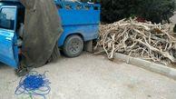 کشف 2 تن چوب تاغ قاچاق در شاهرود