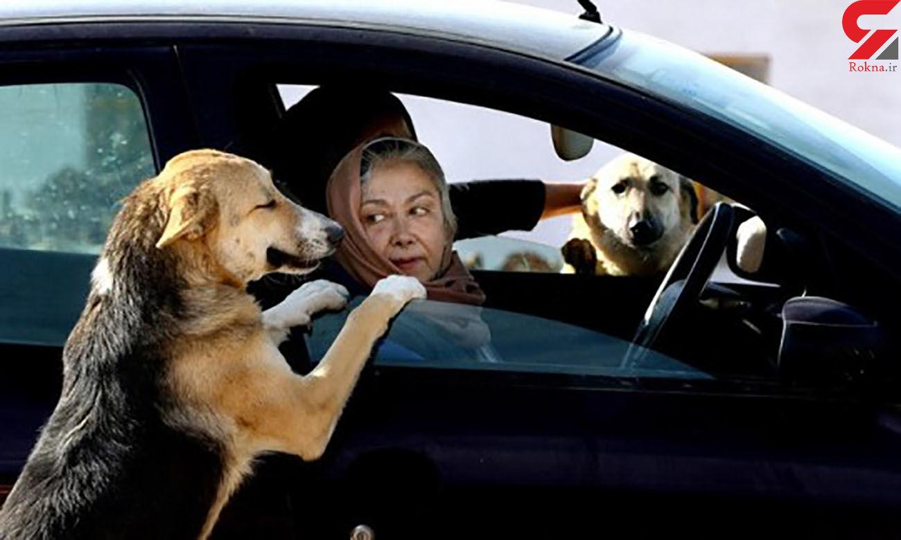 بازار سگهای اشرافی در تهران ! / جمعه بازار سگ ها مشکل جدید تهران