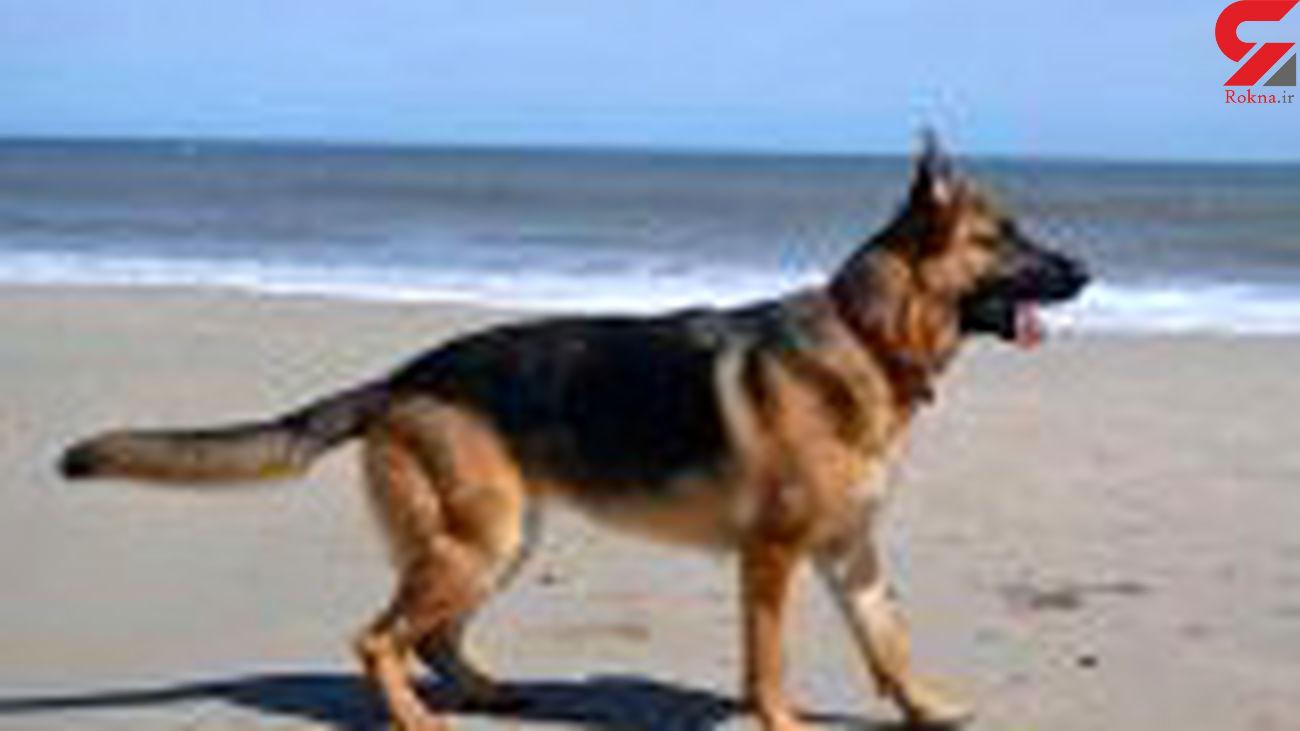 حمله خونین سگ ژرمن به پسر 7 ساله / در ساحل کیش رخ داد
