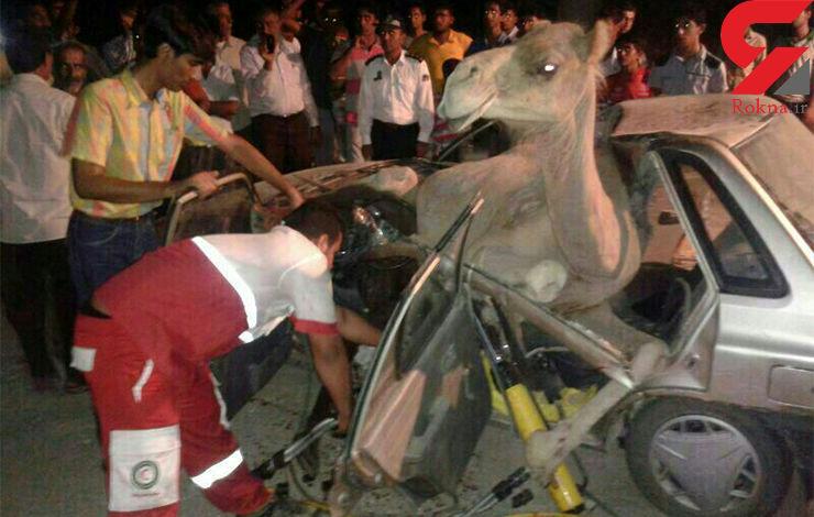 4 قربانی در تصادف پراید با شتر + عکس