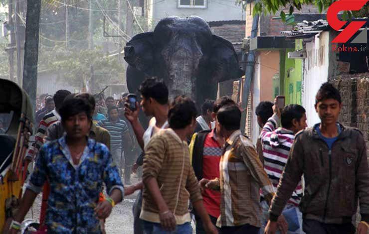 فیل وحشی شهر را بر هم ریخت