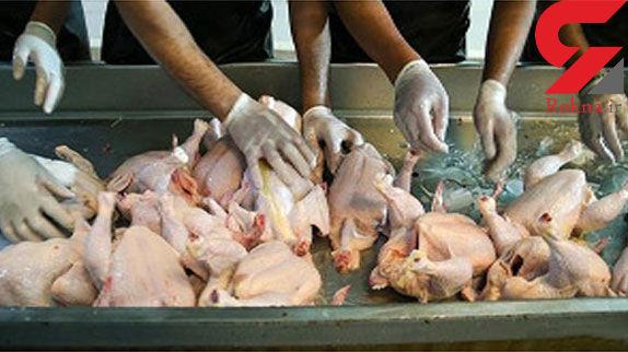 توزیع روزانه ۱۰۰ تن مرغ منجمد تنظیم بازاری به نرخ مصوب دولتی