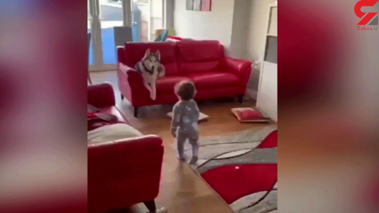 بازی کردن سگ با کودک در خانه + فیلم