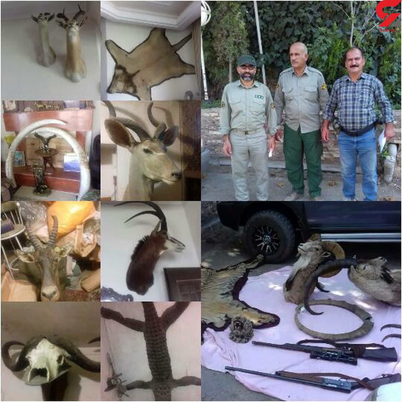 کشف سه تخته پوست حیوانات وحشی و 5 گونه تاکسیدرمی شده حیات وحش در آمل