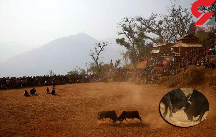 جشنواره گاوها در گاتماندوی نپال