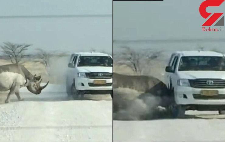 حمله خشونت بار کرگدن به ماشین گردشگران + فیلم