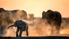 دوش گرفتن فیلها با گرد و خاک+ عکس