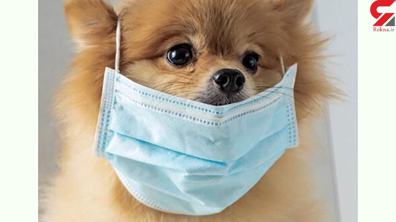 تزریق واکسن کرونا به حیوانات خانگی
