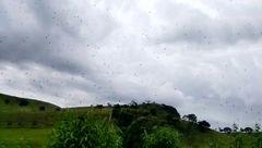 وحشت مردم از بارش ترسناک عنکبوت از آسمان+عکس