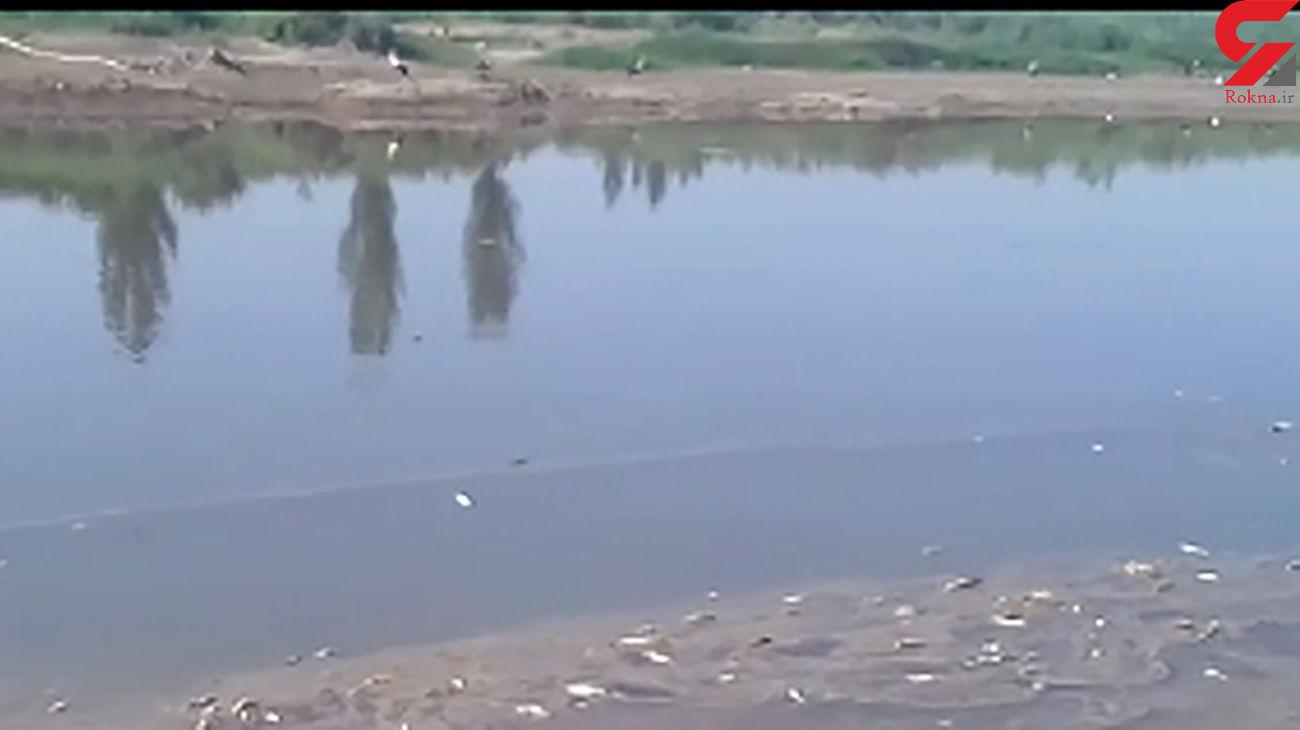 فیلم تلخ از تلف شدن ماهیها در رودخانه زرینه رود