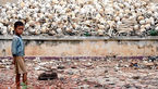 تصویر واقعی از قتل عام هولناک در مزارع + جزییات