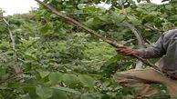 مرگ مرد شیرازی بر اثر سقوط از درخت گردو