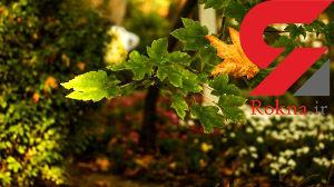 تصاویر زیبا از پاییز تهران در پارک جمشیدیه + عکس ها