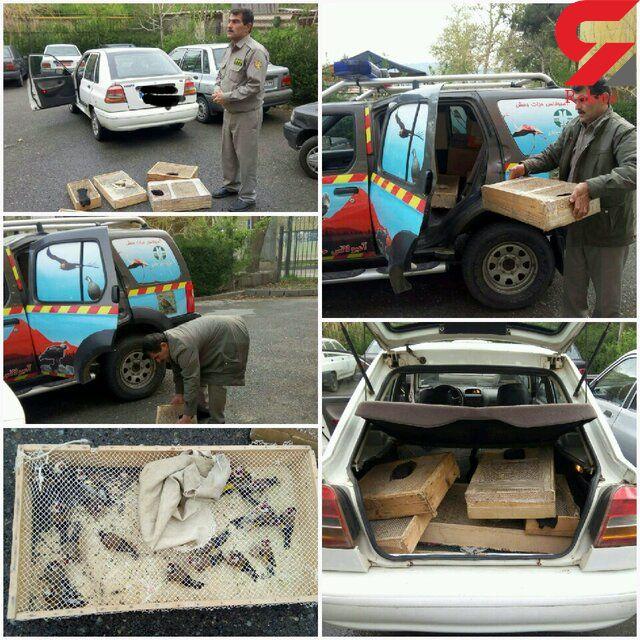 بازداشت شکارچیان پرنده در البرز