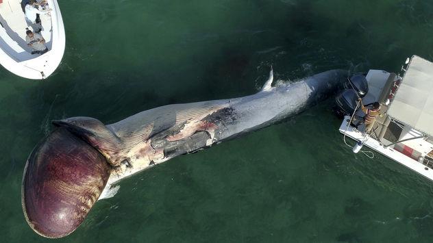 17 عکس از خودکشی دومین نهنگ در خلیج فارس / جزیره کیش در شوک