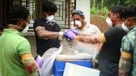 این ویروس بلای جان انسان ها در هندوستان شد