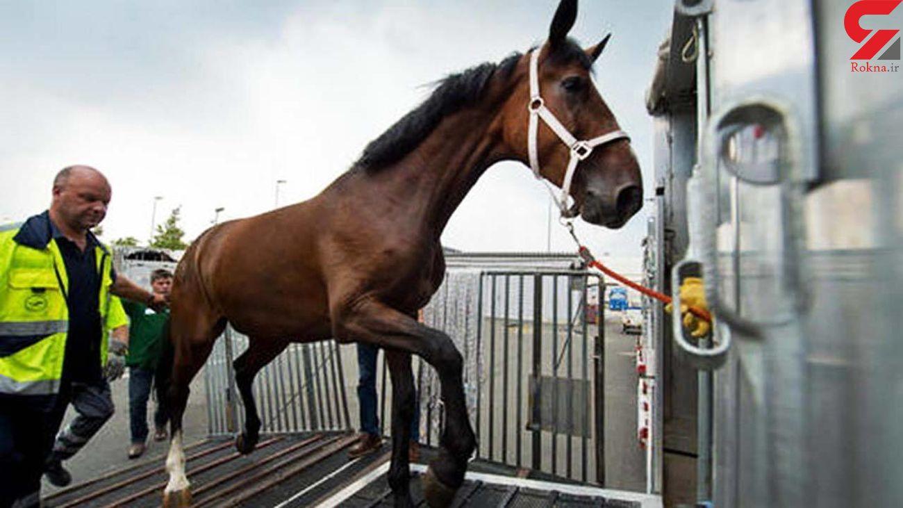 جنازه ای که اسب سواری کرد و باز هم مرد! + فیلم
