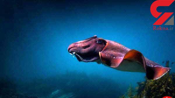 گشت دریایی یک سپیدآج زیباترین تصویر نشنال جئوگرافیک