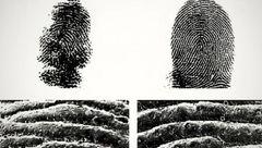 اثر انگشت انسان شبیه به این حیوان است!