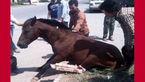 عکس تلخ از تصادف خونین با اسب در رامهرمز + جزییات