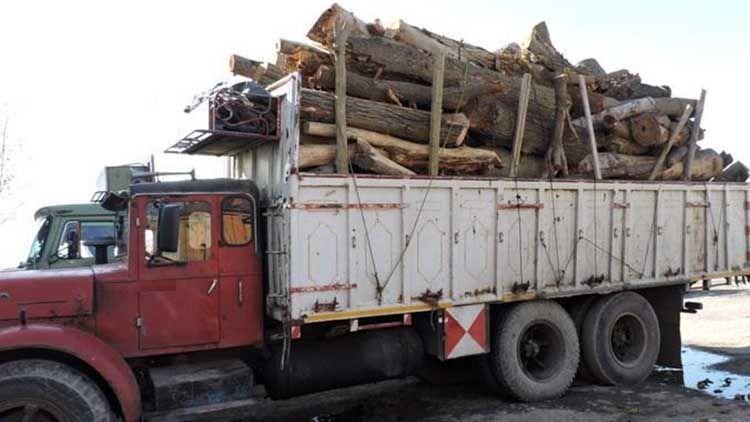 Image result for قاچاق چوب 