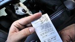 برخورد جدی پلیس با رانندگانی که سگ گردانی میکنند