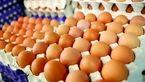 صادرات تخم مرغ ازسر گرفته شد/ افزایش قیمت مقطعی است