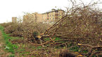 شورای شهر کرج: باغ سیب کرج تا پایان امسال به طور کامل احیا میشود