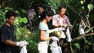 تصاویری که چینیها سانسور کردند / کرونا و خفاش ها در آزمایشگاه ووهان چین!