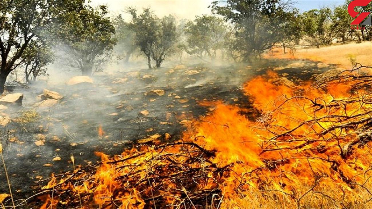 فیلم آتش سوزی هولناک در باغهای روستای طزره دامغان