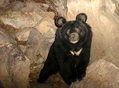 ردپای خرس در ارتفاعات بیرک خاش  دیده شد