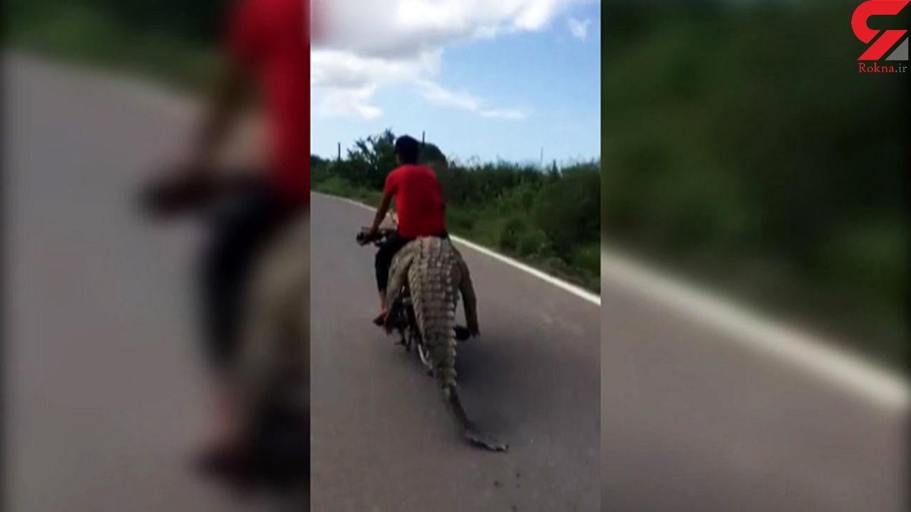 موتورسواری با کروکودیل! + عجیب ترین فیلم