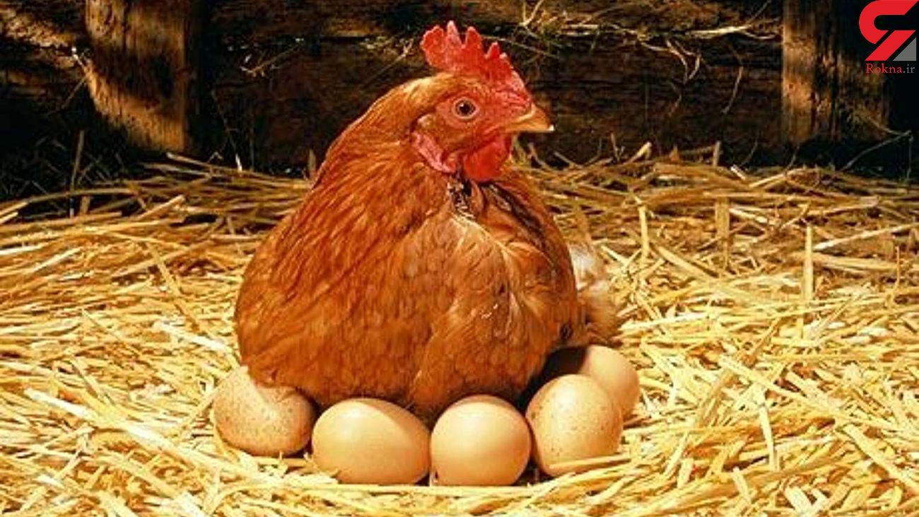 قیمت مرغ و تخم مرغ در بازار شب عید اعلام شد