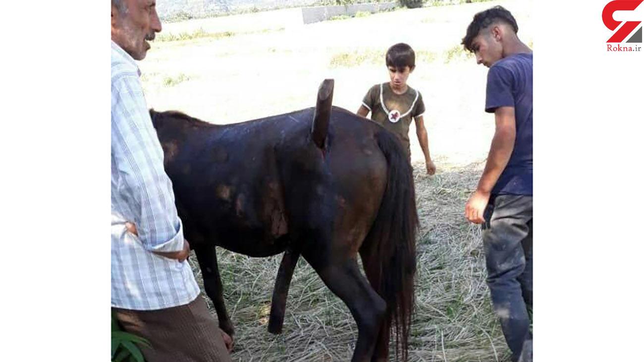 مصدومیت عجیب اسب در روستای لمیر !