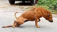 نقشه سگ خیابانی برای تهیه غذا +عکس