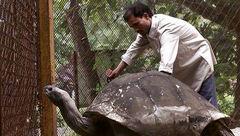 عکسی از لاکپشت پیری که قبل از انقلاب به دنیا آمده بود