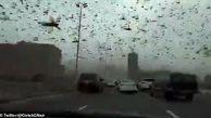 حمله ملخ های گرسنه در بحرین + فیلم و عکس هولناک