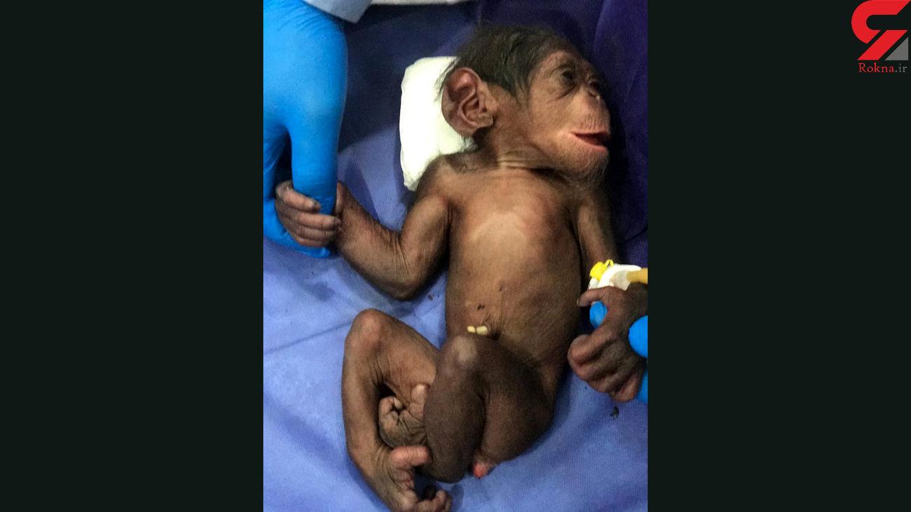 سرنوشت شامپانزه 3 ساله در کشور چه شد؟ + عکس