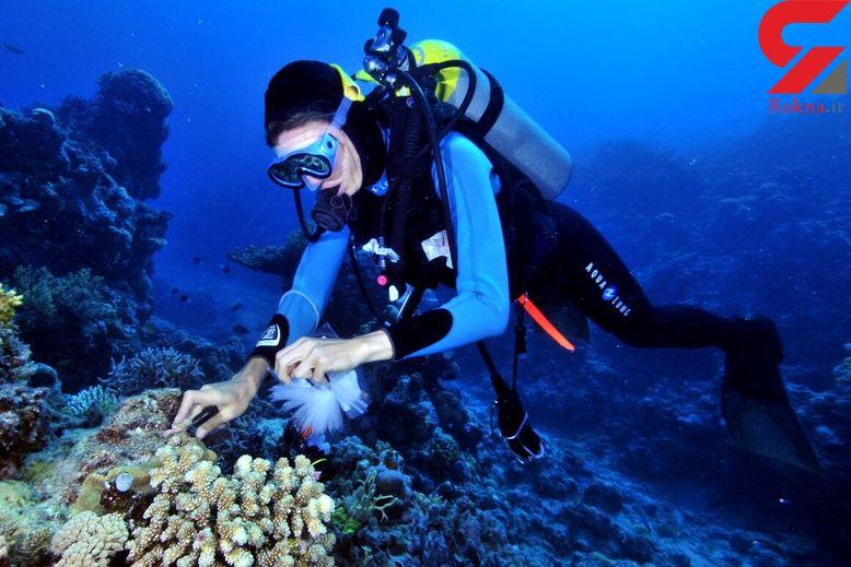درمان سل با اسفنج دریایی