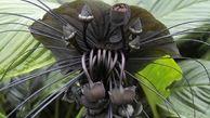 عجیبترین گلهای جهان که از وجوشان بی خبرید!