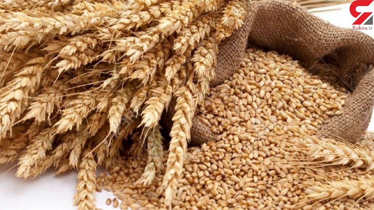 خریداری ۱۰هزارتن گندم توسط تعاون روستایی لرستان از کشاورزان