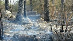 آتش سوزی در پارک جنگلی بیرجند