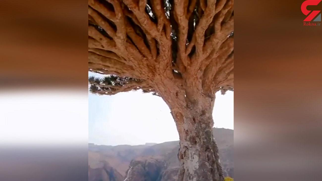 ویژگی های خاص یک درخت هنگام بارندگی + فیلم