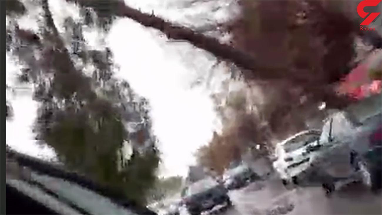 فیلم سقوط درخت روی پژو در اسلامشهر