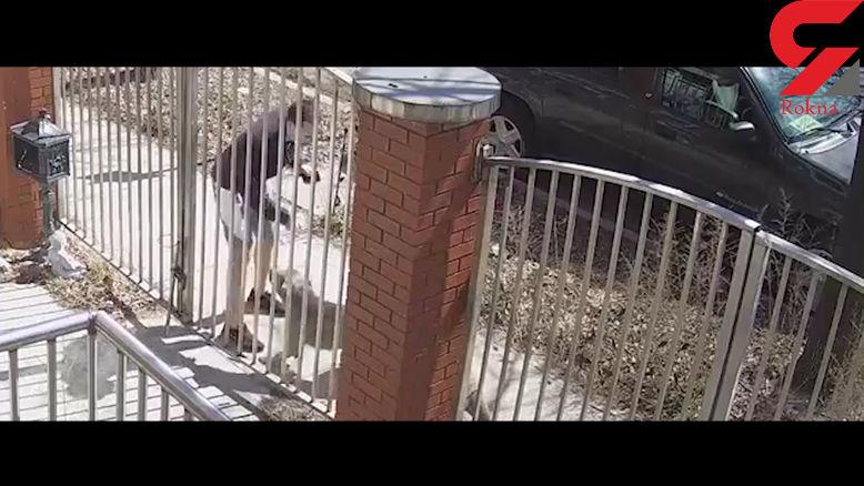 برخورد خونسردانه مرد جوان در حمله وحشیانه یک سگ + فیلم