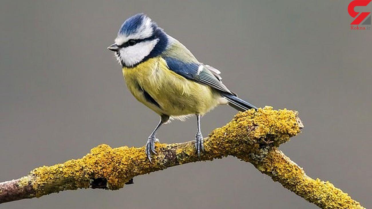 تلاش دیدنی یک پرنده برای نجات جان همنوعش