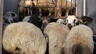 کشف احشام قاچاق میلیاردی در لارستان