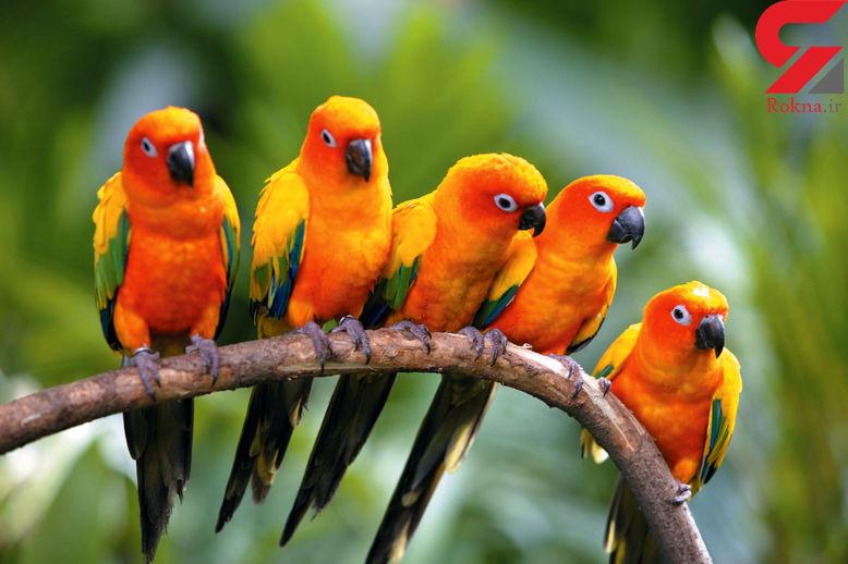 شباهت انسانها به پرندگان کشف شد