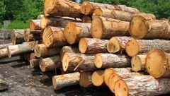توقیف ۲ دستگاه تریلر کشنده حامل ۵۰ تن چوب در جنوب کرمان / ۴ متهم دستگیر شدند